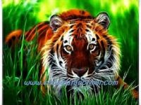 Ageman Rajah Kuku Harimau